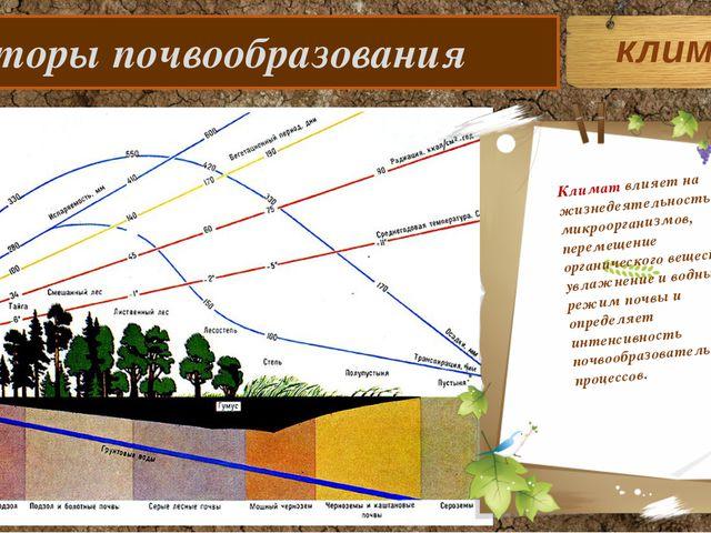 Факторы почвообразования Климат влияет на жизнедеятельность микроорганизмов,...