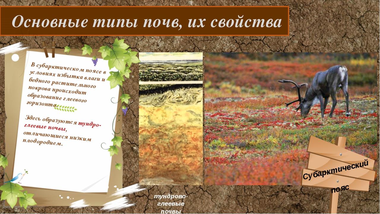 Основные типы почв, их свойства В субарктическом поясе в условиях избытка вл...
