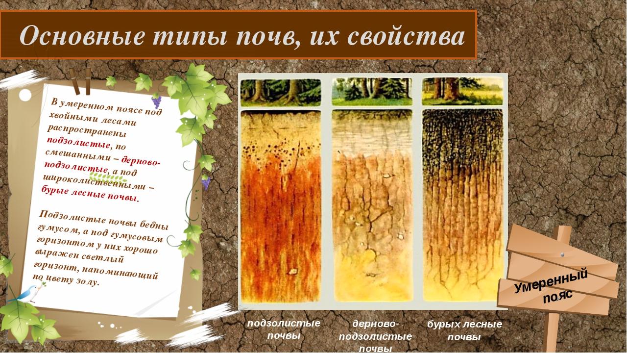 Основные типы почв, их свойства В умеренном поясе под хвойными лесами распро...