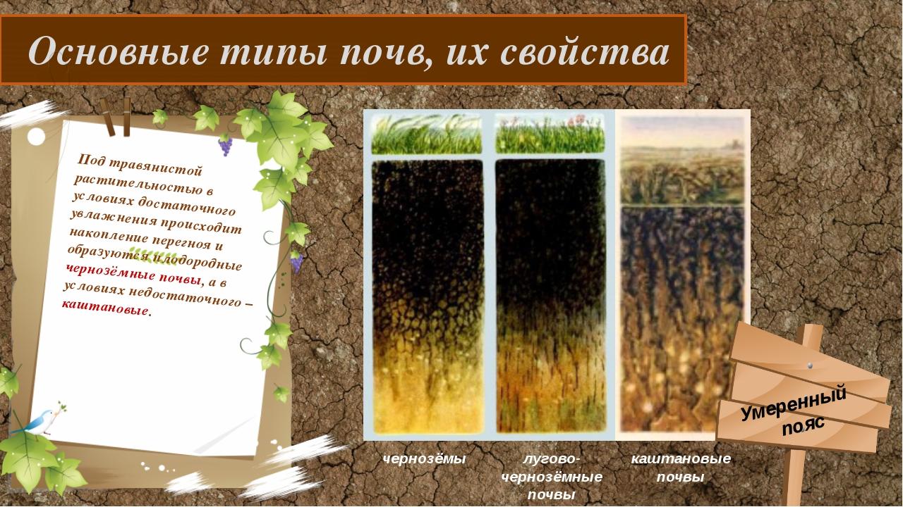 Основные типы почв, их свойства Под травянистой растительностью в условиях д...