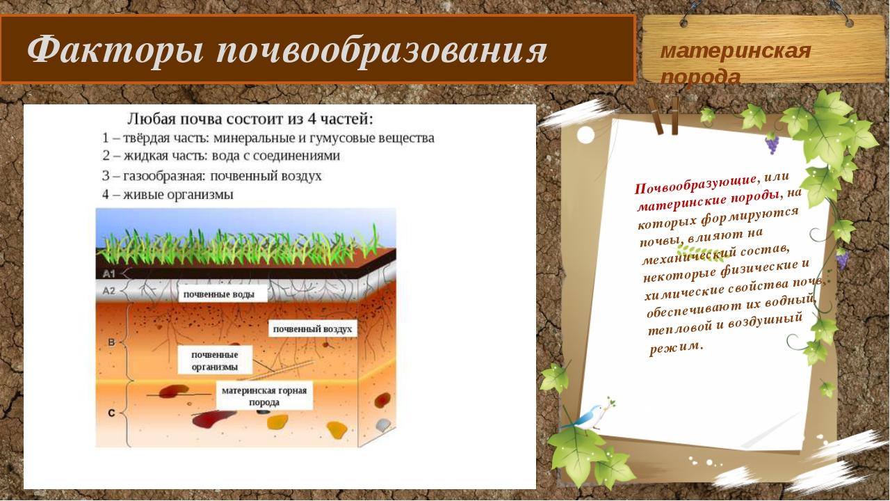 Факторы почвообразования Почвообразующие, или материнские породы, на которых...