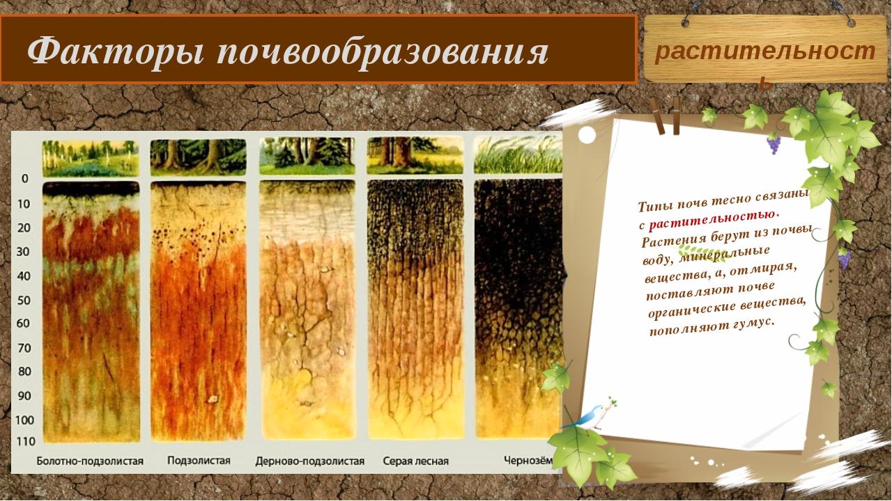 Факторы почвообразования Типы почв тесно связаны с растительностью. Растения...