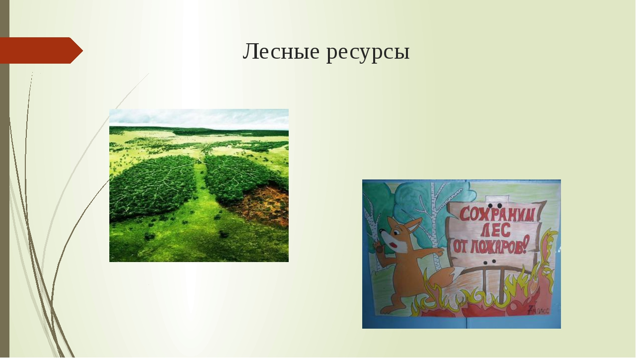 Лесные ресурсы