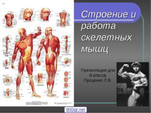 Строение и работа скелетных мышц Презентация для 8 класса Проценко Л.В. 900ig