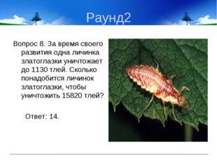 Раунд2 Вопрос 8. За время своего развития одна личинка златоглазки уничтожает
