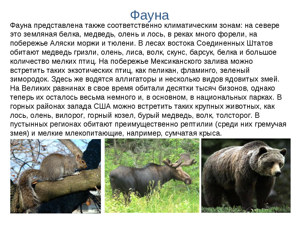 Фауна Фауна представлена также соответственно климатическим зонам: на севере...