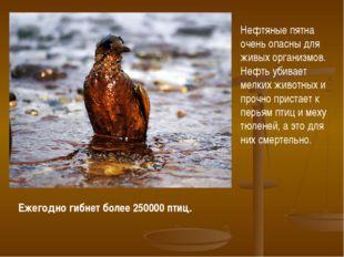 Ежегодно гибнет более 250000 птиц. Нефтяные пятна очень опасны для живых орга