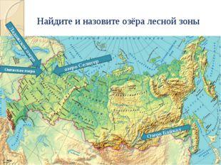 Найдите и назовите озёра лесной зоны озеро Селигер Озеро Байкал Ладожское озе