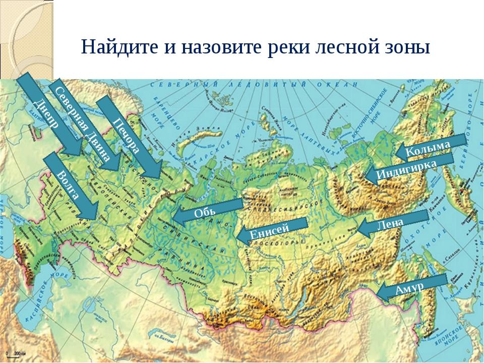 Найдите и назовите реки лесной зоны Волга Северная Двина Печора Обь Енисей Ко...