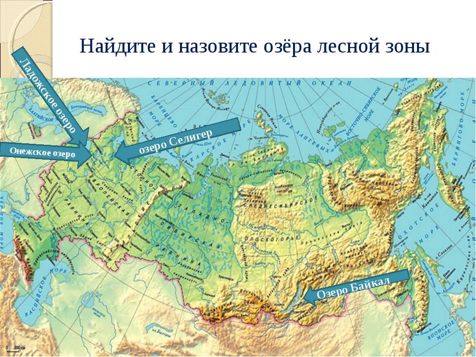 Найдите и назовите озёра лесной зоны озеро Селигер Озеро Байкал Ладожское озе...