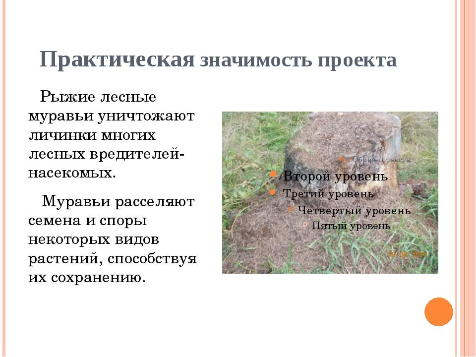 Практическая значимость проекта Рыжие лесные муравьи уничтожают личинки многи...