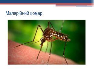Малярійний комар.