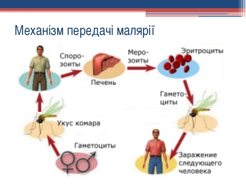 Механізм передачі малярії