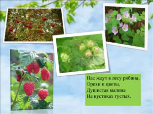 Нас ждут в лесу рябина, Орехи и цветы, Душистая малина На кустиках густых.