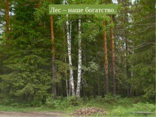 Лес – наше богатство.
