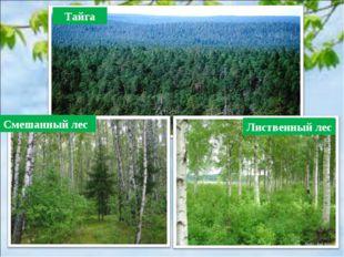 Тайга Смешанный лес Лиственный лес