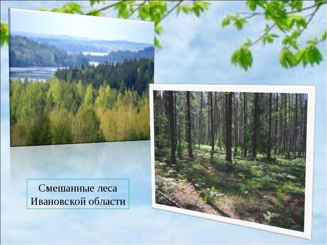 Смешанные леса Ивановской области