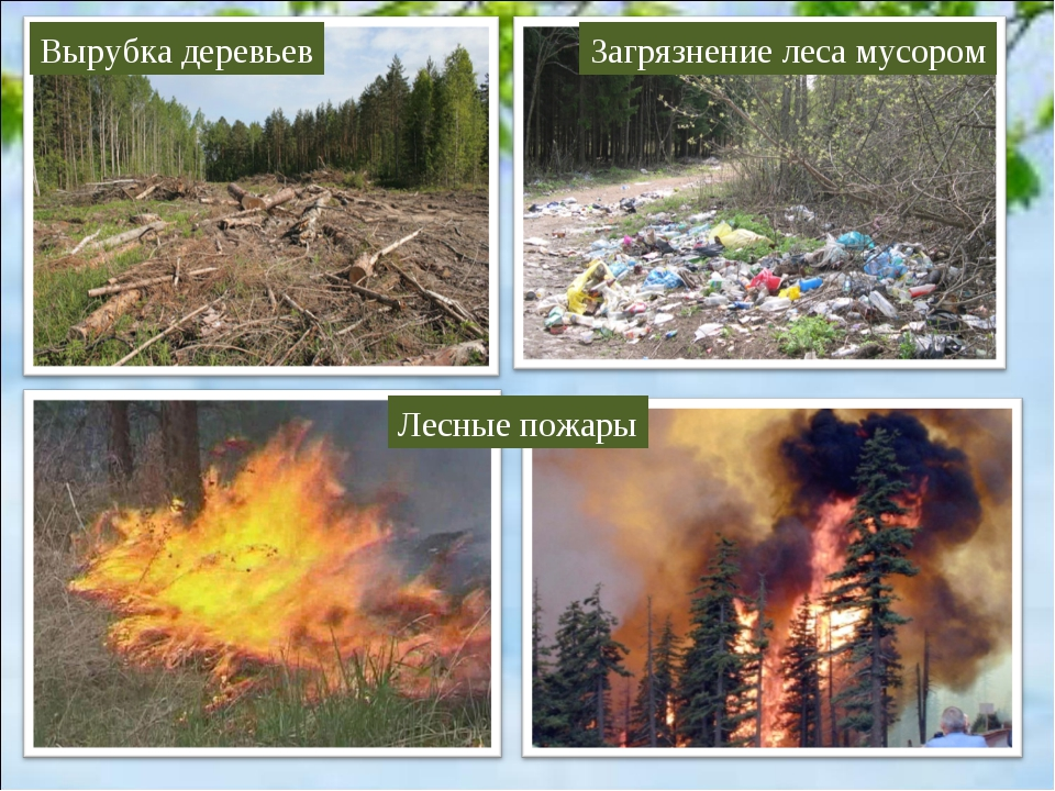 Вырубка деревьев Загрязнение леса мусором Лесные пожары