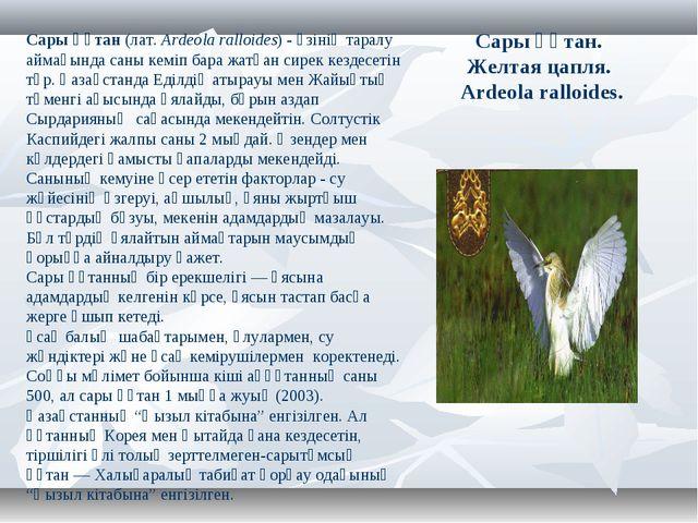 Сары құтан. Желтая цапля. Ardeola ralloides. Сары құтан(лат.Ardeola ralloid...