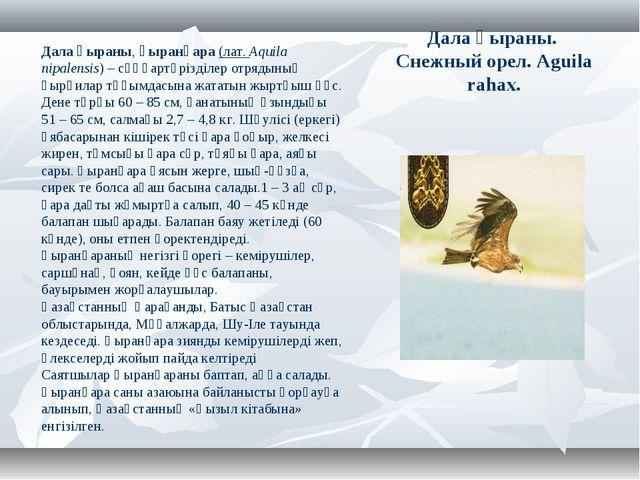 Дала қыраны. Снежный орел. Aguila rahax. Дала қыраны,қыранқара (лат.Aquila...