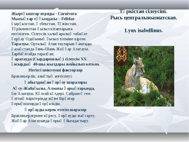 Түркістан сілеусіні. Рысь центральноазиатская. Lynx isabellinus. Жыртқыштар о...