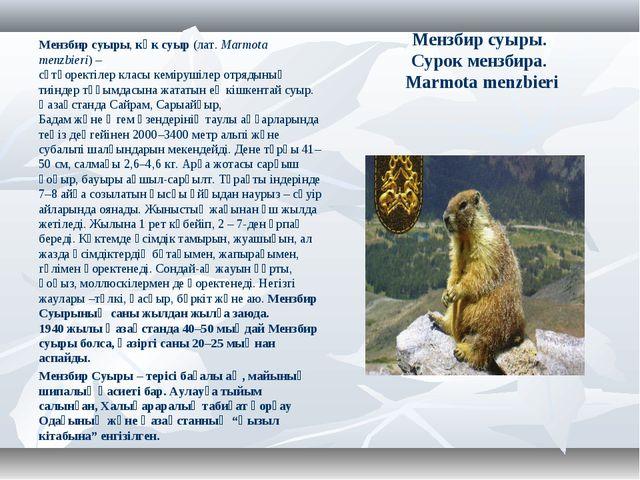 Мензбир суыры. Сурок мензбира. Marmota menzbieri Мензбир суыры,көк суыр(лат...