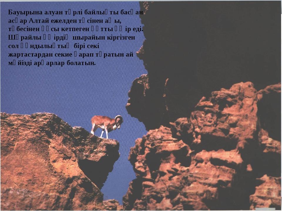 Бауырына алуан түрлі байлықты басқан асқар Алтай ежелден төсінен аңы, төбесін...