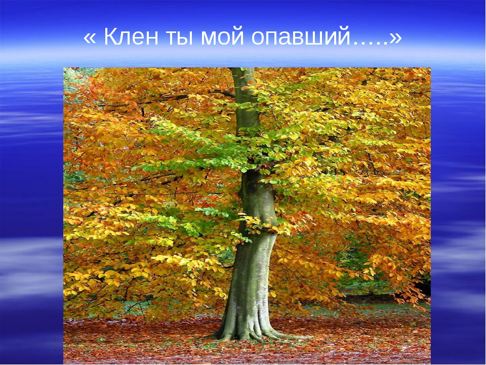 « Клен ты мой опавший…..»