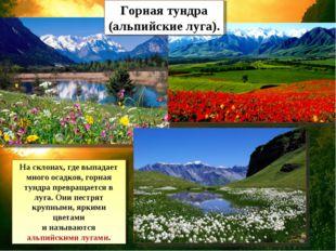 Горная тундра (альпийские луга). На склонах, где выпадает много осадков, горн