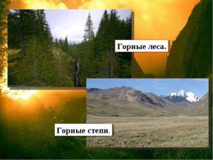 Горные леса. Горные степи.