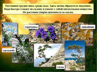 Растениям трудно жить среди скал. Здесь почва образуется медленно. Вода быстр