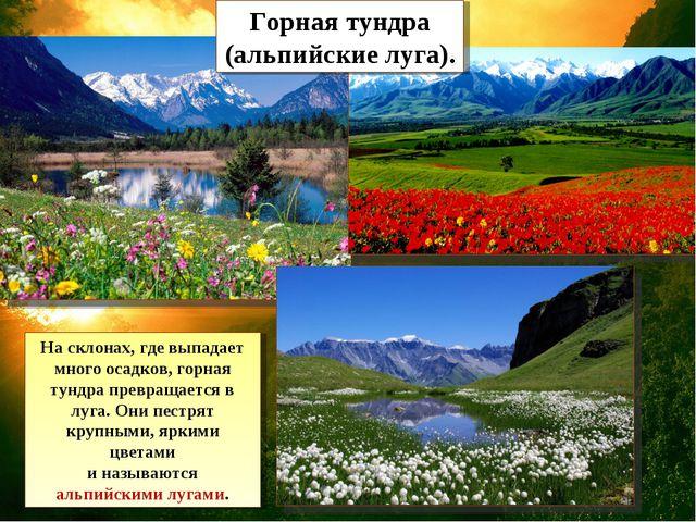 Горная тундра (альпийские луга). На склонах, где выпадает много осадков, горн...