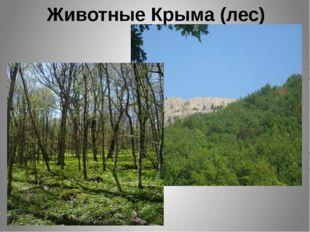 Животные Крыма (лес)
