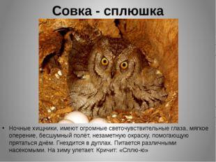 Совка - сплюшка Ночные хищники, имеют огромные светочувствительные глаза, мяг