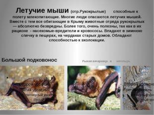 Летучие мыши (отр.Рукокрылые) способные к полету млекопитающие. Многие люди о