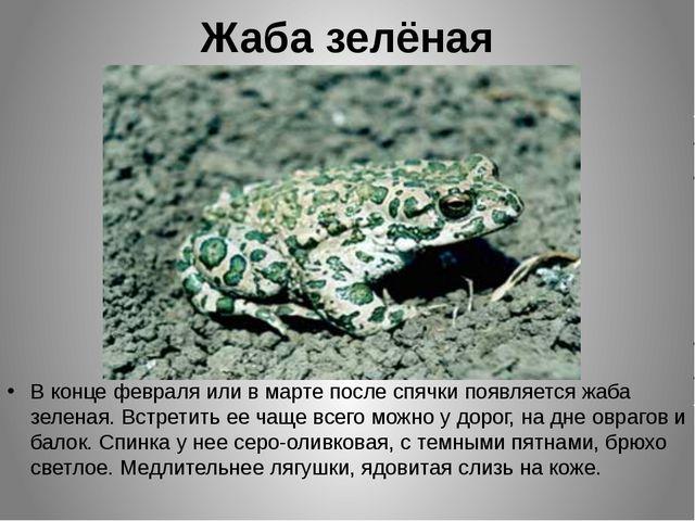 Жаба зелёная В конце февраля или в марте после спячки появляется жаба зеленая...