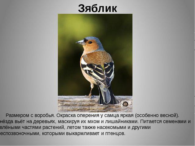 Зяблик Размером с воробья. Окраска оперения у самца яркая (особенно весной)....