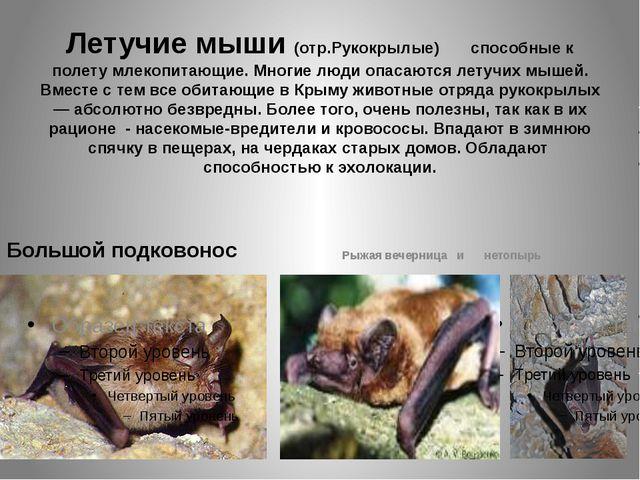 Летучие мыши (отр.Рукокрылые) способные к полету млекопитающие. Многие люди о...