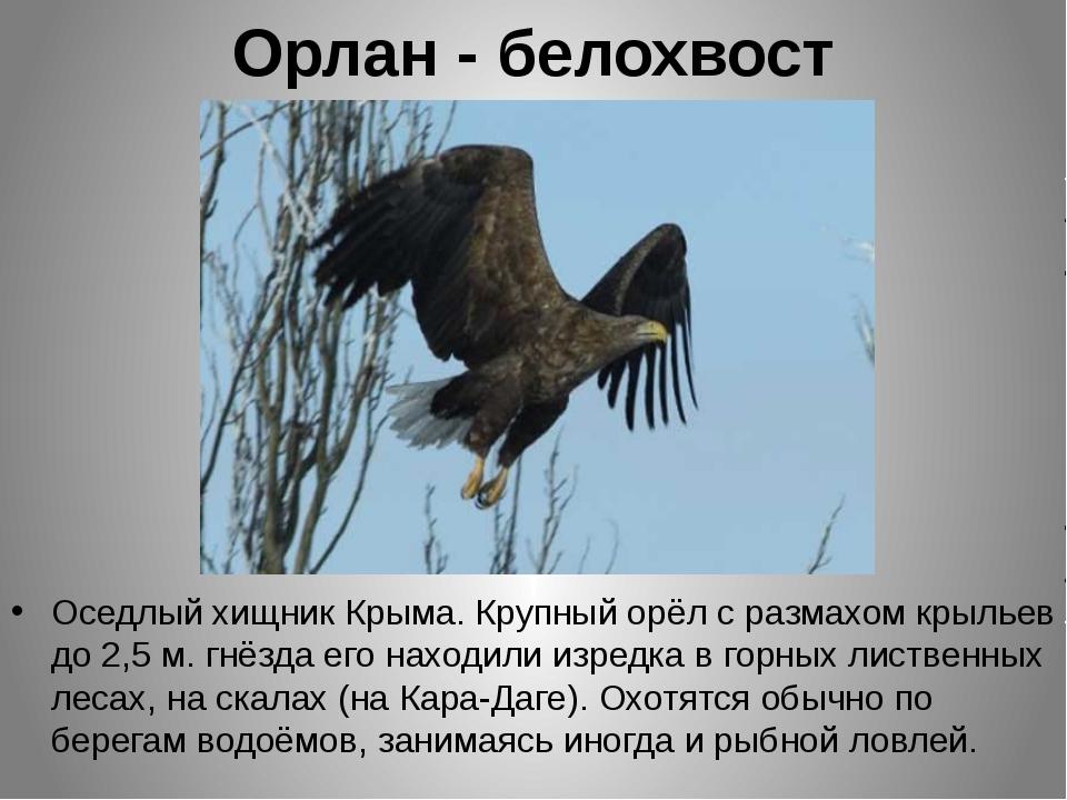 Орлан - белохвост Оседлый хищник Крыма. Крупный орёл с размахом крыльев до 2,...