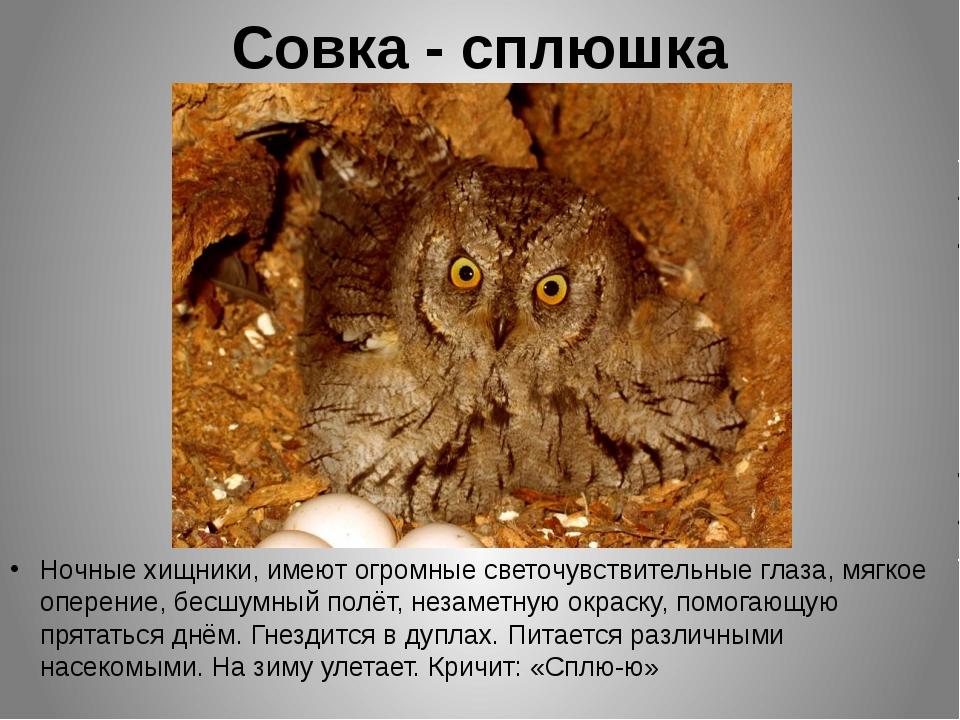 Совка - сплюшка Ночные хищники, имеют огромные светочувствительные глаза, мяг...