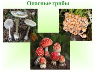Опасные грибы
