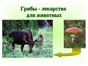 Грибы - лекарство для животных