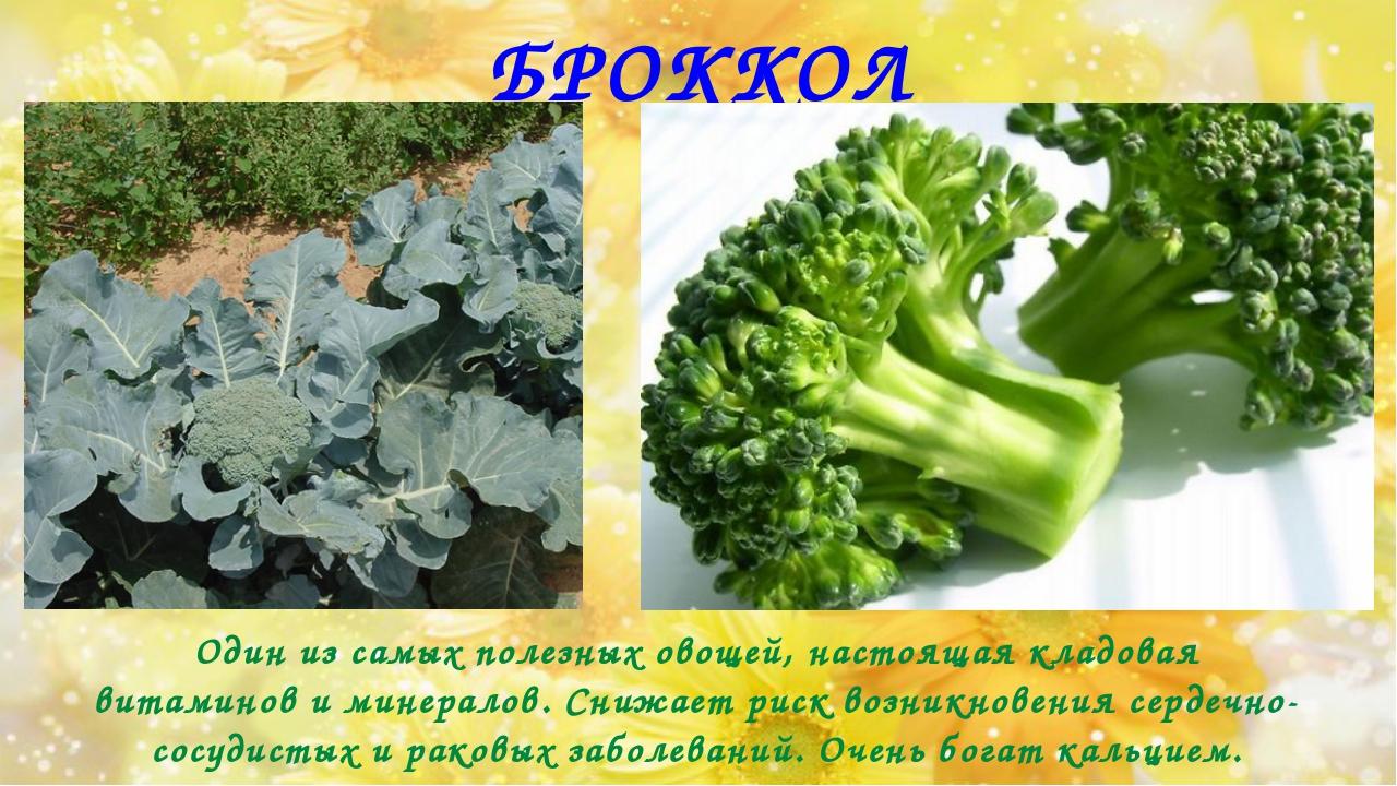 БРОККОЛИ Один из самых полезных овощей, настоящая кладовая витаминов и минера...