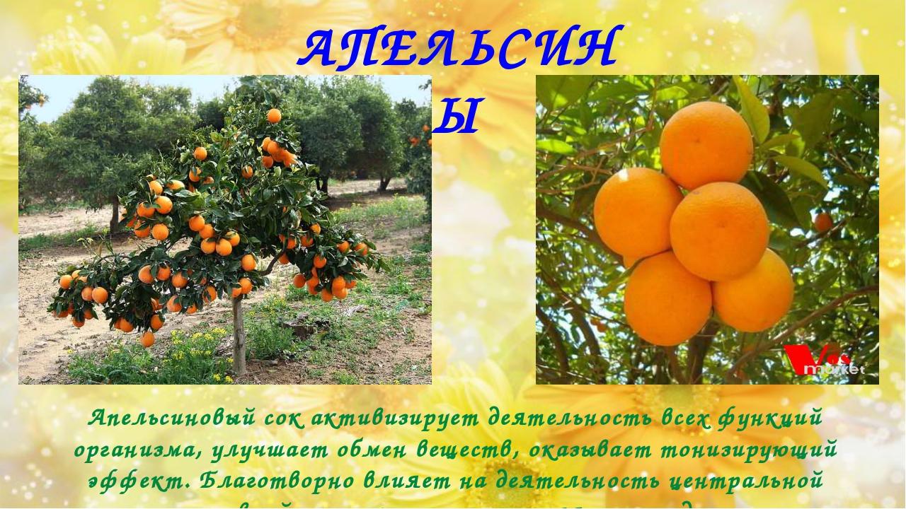 АПЕЛЬСИНЫ Апельсиновый сок активизирует деятельность всех функций организма,...
