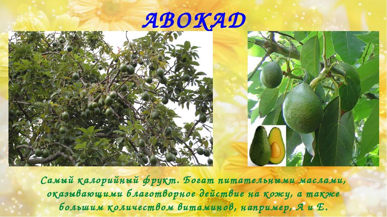 АВОКАДО Самый калорийный фрукт. Богат питательными маслами, оказывающими благ...