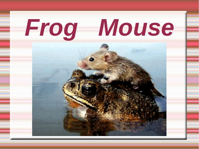 Frog Mouse