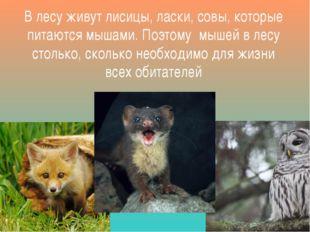 В лесу живут лисицы, ласки, совы, которые питаются мышами. Поэтому мышей в ле