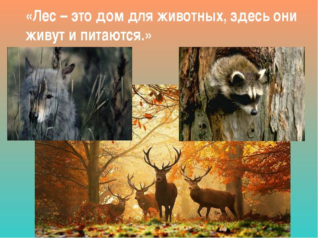 «Лес – это дом для животных, здесь они живут и питаются.»