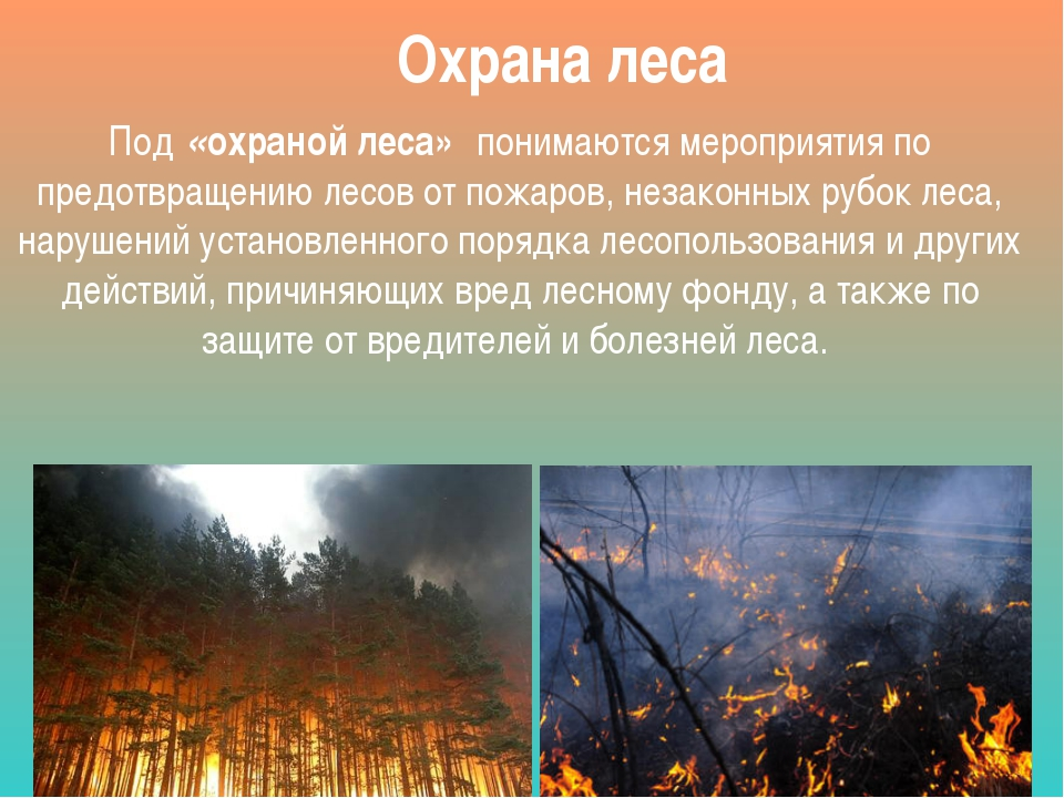 Охрана леса Под«охраной леса»понимаются мероприятия по предотвращению лесо...