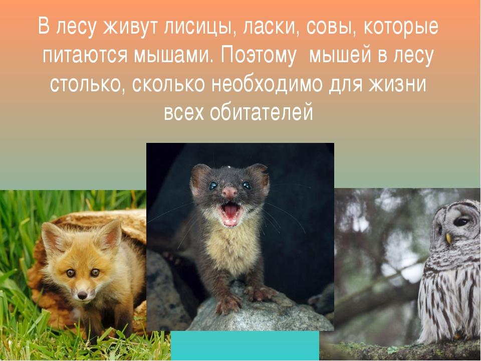 В лесу живут лисицы, ласки, совы, которые питаются мышами. Поэтому мышей в ле...